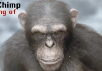 Makingof 3d realistic Chimp In Zbrush